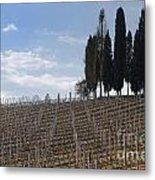 Vineyard With Cypress Trees Metal Print