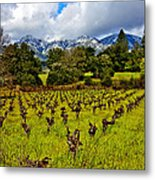 Vineyards And Mt St. Helena Metal Print by Garry Gay