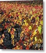 Vineyards At Fall Metal Print