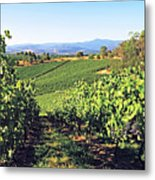 Vineyards In The Yarra Valley, Victoria, Australia Metal Print by Peter Walton Photography