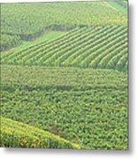 Vineyards Near St Emilion In The Mist Metal Print