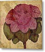 Vintage Cabbage Metal Print by Bonnie Bruno