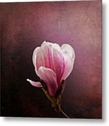 Vintage Magnolia Metal Print by Jane Rix