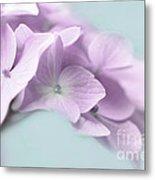 Violet Hydrangea Flower Macro Metal Print