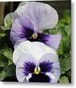 Violet Pansies Flower Metal Print