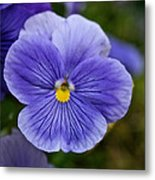 Violets Are Blue Metal Print