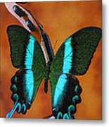 Violin With Green Black Butterfly Metal Print