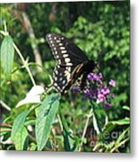 Visit From A Black Swallowtail Metal Print