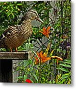 Visitor To The Feeder Metal Print