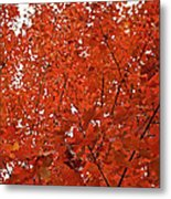 Vividly Sugar Maple Metal Print