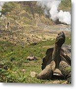 Volcan Alcedo Giant Tortoise Geochelone Metal Print
