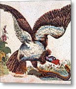 Vulture Attacking A Snake Metal Print