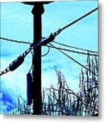 Vulture On Phone Pole Metal Print