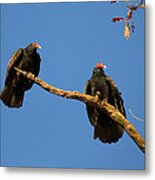 Vultures On A Branch Metal Print