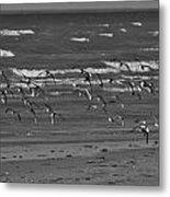 Wading Birds In Flight V4 Metal Print