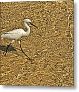 Wading For A Meal Metal Print