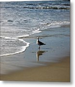 Waiting For Lunch On Shore Metal Print