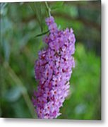 Waiting On Butterflies Metal Print by Beverly Hammond