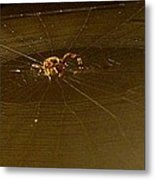 Waiting Spider Metal Print