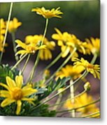 Waking Up To Sunshine Metal Print