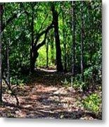 Walk In The Woods Metal Print