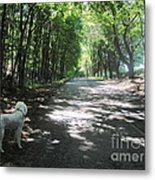 Walking Alden Towards Old Town Hill Metal Print