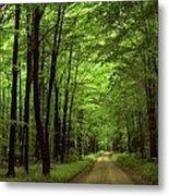 Walking Away Forest Path  Metal Print