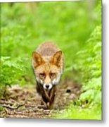 Walking Fox Metal Print