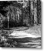 Walking In The Springtime Woods In Black And White Metal Print