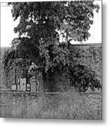 Wall Tree Metal Print