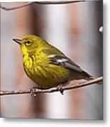 Warbler - Pine Warbler - Oh So Yellow Metal Print