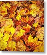 Warm Leaves 5879  Metal Print