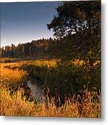 Warm Morning Sun. The Trossachs National Park. Scotland Metal Print