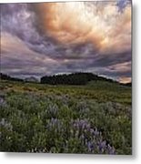 Washington Gulch Flowers Metal Print