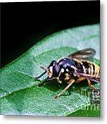 Wasp Break Metal Print