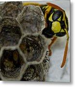 Wasp Nest Metal Print by Dean Bennett