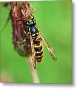 Wasp On Plant Metal Print