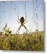 Wasp Spider Argiope Bruennichi In Web Metal Print