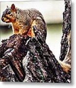 Watchful Squirrel Metal Print