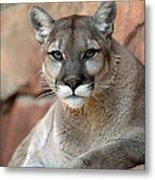 Watching Cougar Metal Print