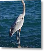 Watching For Fish Metal Print