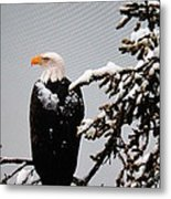 Watching Over The U.s.a. Metal Print