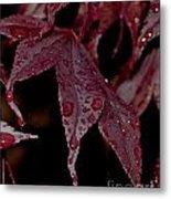 Water Beads Of Red Metal Print