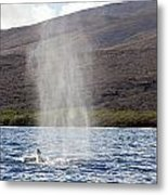 Water From A Whale Blowhole Metal Print