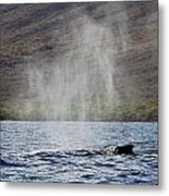 Water From A Whale Blowhole II Metal Print