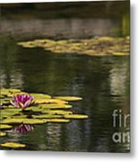 Water Lilies And Lily Pads Metal Print