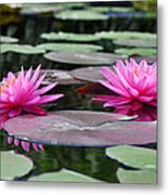 Water Lilies Metal Print by Bill Cannon