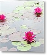Water Lilies In The Morning Metal Print by Michael Taggart
