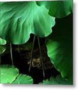 Water Lilies Of Green Metal Print