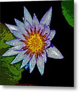 Water Lilly Paint Metal Print